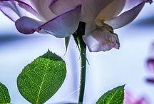 Flora / by Marie Salias