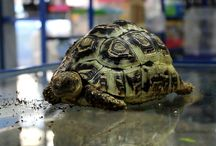 Reptiles / Información sobre reptiles y terrarios.