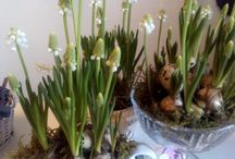 Lente & Pasen