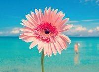 Цветущий берег,цветы и море