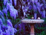 Garden Party / by Jordan Holliday