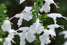 White flower bed
