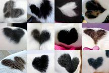 Cat Fur Hearts / Thanks to Band of Cats for accumulating these photos.