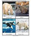 """Arctic Tundra / We love learning about the Arctic! To comply with the US Copyright Office, section 107, all of my Pinterest boards and pins are for """"criticism, comment, news reporting, teaching, scholarship, and research"""" as well as for nonprofit, educational purposes""""... I am not a lawyer, but tried to make sense of this: http://www.copyright.gov/fls/fl102.html"""