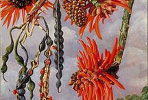 Marianne North Botanical Painter / Beautiful paintings of flowers and plants and sometimes animals and birds. Displayed  at Kew Gardens
