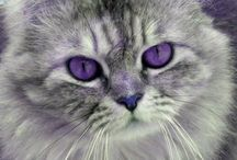 Cats with purple eyes