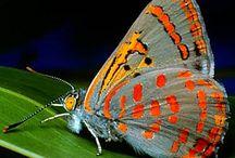 Butterflies / Colour