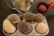 Skurile Igel-Cupcakes