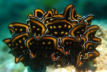 critters - Nudibranchs deserve more attention! / I never heard of these things while I was in school! They're so ORNATE!!! and beautiful.