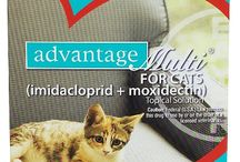 Heartworm Medicine for Cats