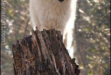 Seje dyr / Awesome animals