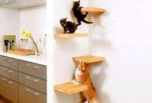 cat area