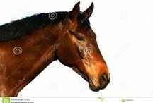 p3rfil caballo