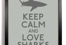 I ♡ sharks / I adopted a shark on the Defenders of Wildlife site, 25$ goes toward protecting these amazing and beautiful animals. Not to mention, you get an awesome plushy♡ / by Destra