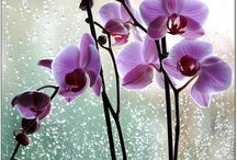 No flowers..just orchids
