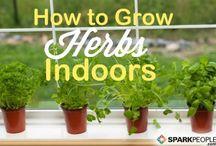 Herb box / Herb box