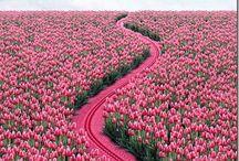 ಌ 50 Shades of Pink ಌ