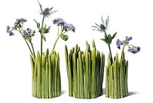 Nice vases / by Something Nice Today
