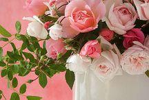 Old roses / オールドローズ 薔薇