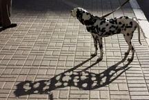Animals / by Kim Martyn