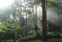 'The back yard' / Rainforest delight