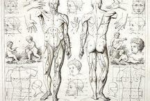 Art - Human Body