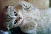 Мой кот