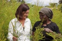 Scented Tea Tree from Kenya / Susan Curtis, NYR's Natural Health Director, recently visited Kenya to meet the wonderful farmers who harvest our beautiful organic tea tree oil. She captured her amazing trip on camera and these photos show how it is lovingly harvested and transformed into the tea tree oil used in our products… Take a look!