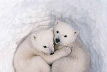 Animals with fur