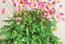 Garden gimmicks