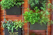 balcony kitchen garden