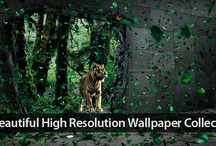 Wallpapers / by 1stWebDesigner