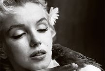 Marilyn and Animals / Marilyn and Animals