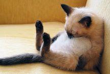 Katt  - kos