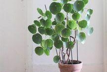 Pflanzen, gemütliches Wohnen