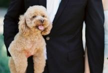 Wedding Pets / Really adorable pets at weddings!