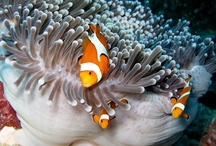 similan islands thailand / http://www.similandivecenter.com  The Similan islands are world famous. Similan Dive Center offers daily departing scuba diving daytrips and snorkeling tours. Or join us on our dive safaris from 2 days /1 night till 5 days / 5 nights