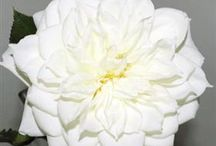 Classic White Wedding / by Mayesh Wholesale Florist