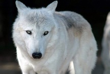 Wonderful Wolves / by Carol de la Pole