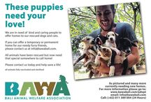 Adopt an Animal / Please, help us spread our adoption posters far and wide.