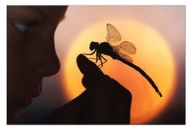 Wouldn't be me without... Dragonflies :) / by Nikky Lay