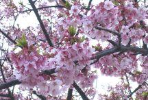 Flowers / Flowers around me