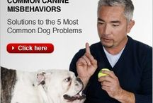 Cesar Millan advices