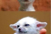 Baby Animals. / Forskjellige dyr som baby❤️