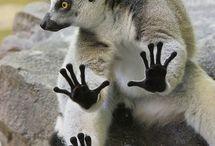lemurovo / moji milenííííí