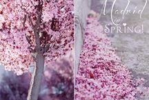 Les beaux jours du primtemps arrivent