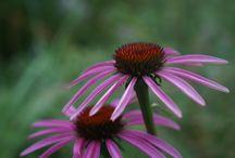 Цветы и природа