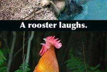 Adult humor