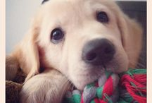 Buck  / My little friend
