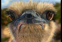 Wildlife and Animal Art / I love animals and wildlife!